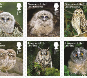 Owl stamps from Royal Mail